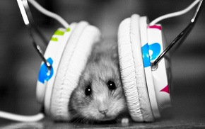 animals, mood, humor, headphones