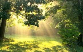 glade, trees, forest, Sun, nature