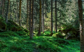forest, nature, trees, greenery, landscape