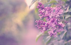 color, flowers, branch, shrubs