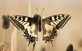 butterfly, wings, beautiful, macro