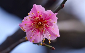 цветок, макро, Розовый, ветка