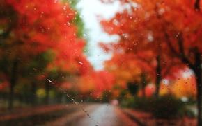 autumn, road, trees, motion blur, rain