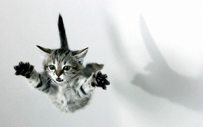 animals, kitten, fly