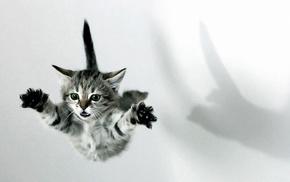 animals, kitten, fly
