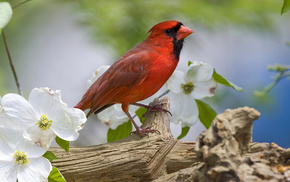 bird, branch, flowers, animals, spring