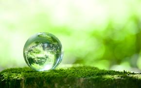 macro, moss, bokeh, reflection, greenery