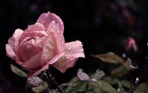 leaves, flowers, drops, petals, flower