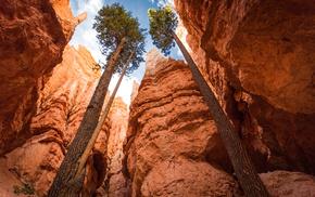canyon, sky, USA, trees, rocks