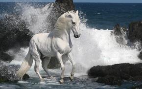 gray, horse, animals, stones, sea