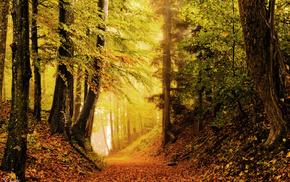 foliage, autumn, forest, nature