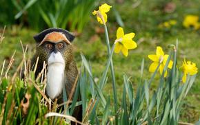 nature, flowers, grass, animals