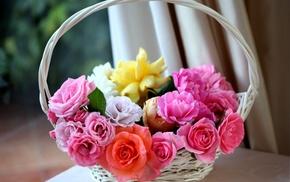 pink, white, orange, flowers, roses