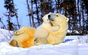 tenderness, animals, snow
