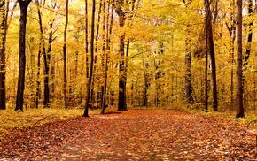 leaves, trees, landscape, autumn, nature