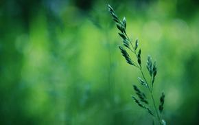 spring, greenery, macro, grass, bokeh