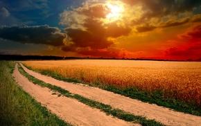 небо, поле, трава, колосья, природа, Закат