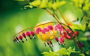 flowers, stunner