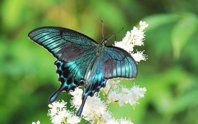 summer, sailfish, animals, flower, butterfly