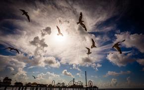 stunner, pier, nature, landscape, birds