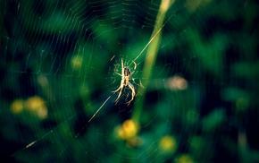 macro, stunner, green, beautiful, spider