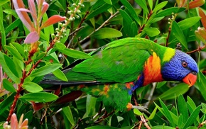 bird, twigs, animals, leaves