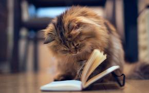 wallpaper, animals, book