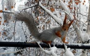 animals, winter, twigs, squirrel