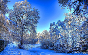 winter, twigs, nature, snow, trees