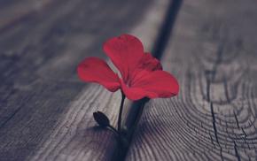 flowers, macro, red, flower