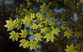 nature, foliage, branch, macro