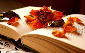 petals, stunner, book, rose, flower