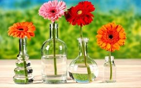 flowers, water, bottle, table