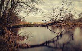 lake, nature, moss, reflection, tree
