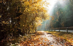 autumn, forest, rays, road