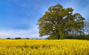 красота, дерево, небо, лето, поле