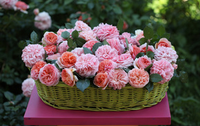flowers, basket, roses