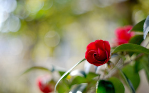 flower, flowers, highlights, motion blur