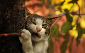 animals, branch, cat, tree