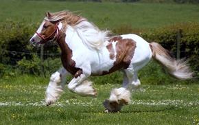 жеребец, жеребцы, животное, поле, лошадь, природа