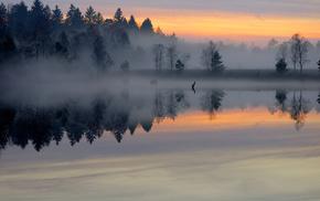 forest, pond, nature, dawn, mist