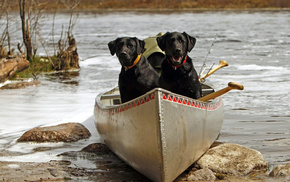 black, animals, boat, color