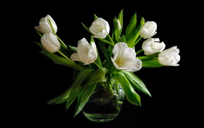 tulips, bouquet, black background, flowers