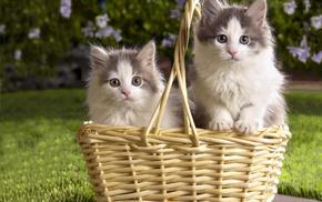 animals, kittens, grass, basket