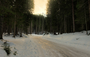 trees, snow, forest, winter, road