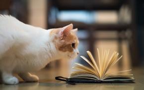 book, animals