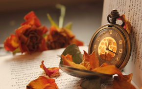 petals, clocks, book, stunner, flowers