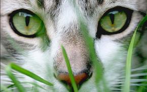 grass, animals, muzzle, eyes
