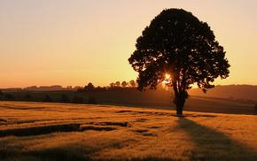 field, tree, sunset, nature, landscape