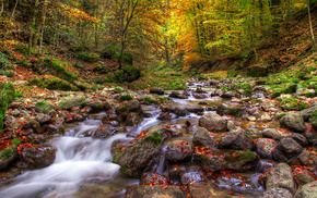 forest, leaves, water, trees, autumn